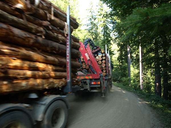 Abstransport-Holz-LKW